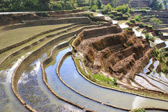 terrasse yunnan de hani de porcelaine photos libres de droits