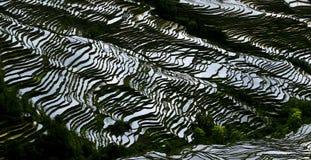 Terrassement de riz-paddy de Yunnan Images libres de droits