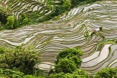 Terrassement de riz-paddy de Yunnan Photographie stock