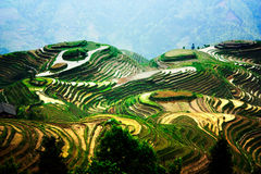 Terrassen Guangxi, China lizenzfreies stockfoto