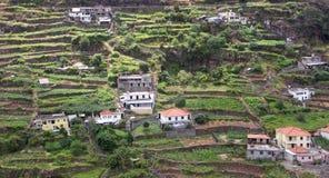 Terrassen Madeira Stockfoto