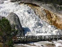 Terrassen Mammoth Hot Springs, gelber Stein Stockfotografie