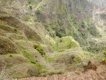 Terrassen met koffieaanplantingen in Midden-Amerika Stock Fotografie