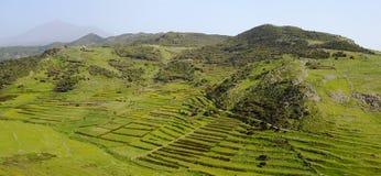 Terrassen an Teno-Alt und an EL Teide lizenzfreie stockbilder
