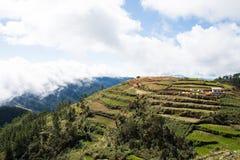 Terrassen van landbouwbedrijven royalty-vrije stock afbeelding