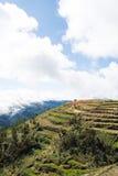 Terrassen van landbouwbedrijven royalty-vrije stock afbeeldingen