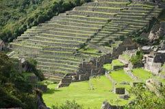 Terrassen von Machu Picchu Stockfotografie