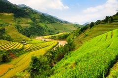 Terrassenreisfelder auf Berg im Nordwesten von Vietnam lizenzfreie stockfotografie