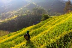 Terrassenreisfelder auf Berg im Nordwesten von Vietnam lizenzfreie stockfotos