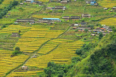 Terrassenreisfelder in Nepal Stockfotografie