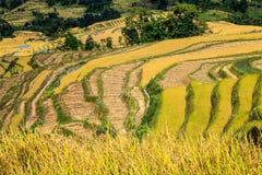 Terrasser av rice Royaltyfria Foton
