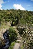 terrasser för banaueifugaophilippines rice Royaltyfria Bilder