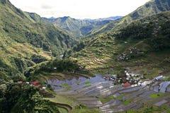 terrasser för batadifugaophilippines rice Royaltyfri Bild