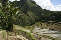 terrasser för batadifugaophilippines rice Royaltyfri Foto