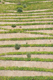 Terrasser för Douro dalPortugal vingård Royaltyfri Bild