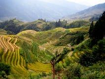 terrasser för porslinguilin rice Fotografering för Bildbyråer