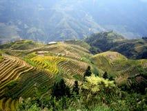 terrasser för porslinguilin rice Arkivfoto