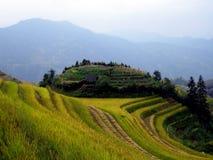 terrasser för porslinguilin rice Royaltyfria Foton