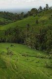 terrasser för rice för bali jatiluwih Arkivfoto