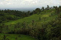 terrasser för rice för bali jatiluwih Royaltyfria Foton