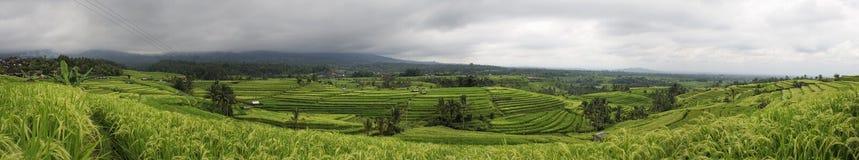 terrasser för rice för bali jatiluwih Royaltyfria Bilder