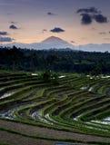 terrasser för rice för bali jatiluwih Arkivbild