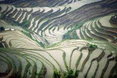 terrasser för rice för guangxilongjilandskap Royaltyfri Foto