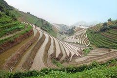 terrasser för rice för guangxilongjilandskap Arkivbilder