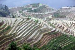 terrasser för rice för guangxilongjilandskap Arkivbild
