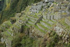Terrasser på Machu Picchu i Peru Arkivbild