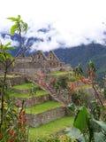 Terrasser på Machu Picchu peru Fotografering för Bildbyråer