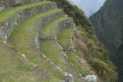 Terrasser på Machu Picchu i Peru Royaltyfri Foto