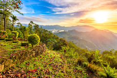 Terrassera på kullen i bergen av centrala Sri Lanka Royaltyfri Foto