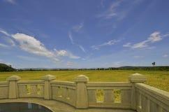 Terrassera siktspunkt för att hålla ögonen på den guld- risfältet och blå himmel royaltyfri fotografi