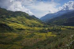 Terrasserad dal på skördsäsongen på den SapaTerraced dalen på skördsäsongen på Sapa Arkivfoto