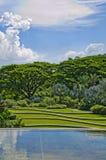 Terrasserad fält och skog royaltyfria bilder