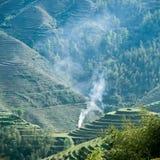 terrasserad grön rök för fält Royaltyfri Bild