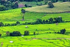 terrasserad grön rice för fält Arkivbild