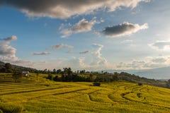 terrasserad grön rice för fält royaltyfria foton
