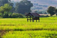 Terrasserad rice sätter in i nordliga Thailand Royaltyfria Foton