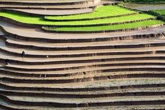 Terrasserad rice sätter in med bevattnar i Mu Cang Chai Arkivbild