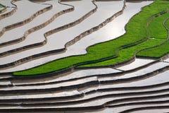 Terrasserad rice sätter in med bevattnar i Mu Cang Chai Royaltyfria Bilder