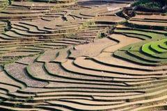 Terrasserad rice sätter in med bevattnar i Sapa Arkivbilder