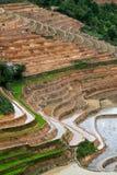 Terrasserad rice sätter in med bevattnar och hus på styltor i Mu Cang Chai Royaltyfria Bilder