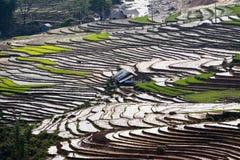Terrasserad rice sätter in med bevattnar och hus på styltor i Sapa Royaltyfri Fotografi