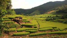 Terrasserad ricefält och koja på berg arkivbild