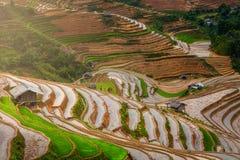 Terrasserad ricefield i vattensäsong i La Pan Tan, Vietnam Royaltyfri Fotografi