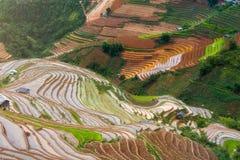 Terrasserad ricefield i vattensäsong i La Pan Tan, Vietnam Arkivfoton