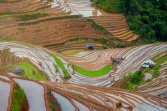 Terrasserad ricefield i vattensäsong i La Pan Tan, Vietnam Royaltyfri Foto