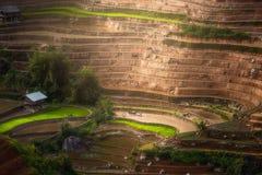 Terrasserad ricefield i vattensäsong i La Pan Tan, Vietnam Arkivfoto